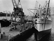 Black and white photo of docked ships